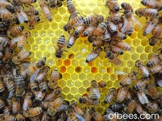 pollenrawhoney
