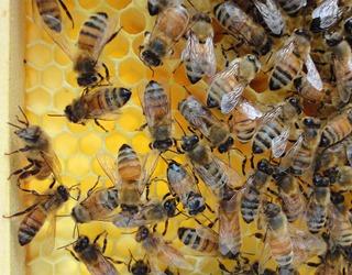 bees_comb_light