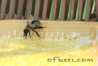 bumblebeecleaner