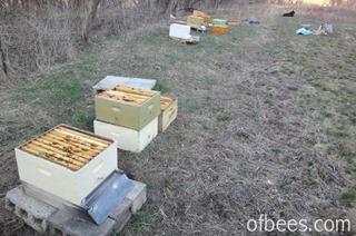 apiarysetup