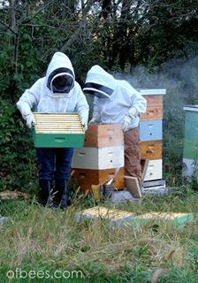 honeysupers